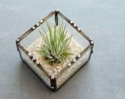 small terrarium with air plant geometric planter glass
