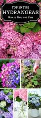 list of fall flowers best 25 flower beds ideas on pinterest flower gardening