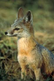 California wild animals images Wild animals dying off facing extinction due to endless jpg