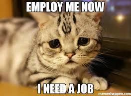I Need Memes - employ me now i need a job meme kitty 49885 memeshappen