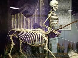 Horse Skeleton Halloween Best 25 Horse Halloween Costumes Ideas On Pinterest Horse My
