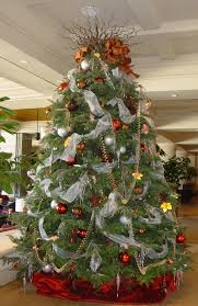 live christmas trees awesome live christmas trees redesigns your home with more