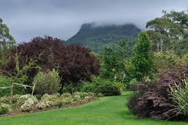 Botanical Garden Wollongong Wollongong Botanic Garden Places And Pics