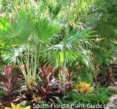 Florida Garden Ideas South Florida Landscaping Ideas Landscape In A Box