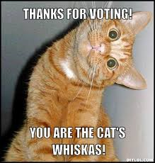 Voting Meme - thanks for voting cat meme cat planet cat planet
