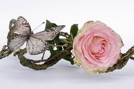 Gambar alam mekar menanam daun bunga berkembang cinta hijau
