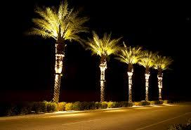 Led Landscape Tree Lights Stella Led Palm Tree Light Bradley Lighting Palm Tree Lighting
