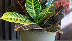 best incridible indoor plants low light hgtv 19088