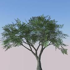 olive trees 3d model formfonts 3d models textures