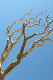 manzanita branches for sale branches sanded 21 38