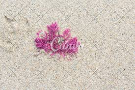 wedding flowers northton pink seaweed on photos by canva
