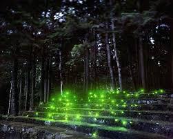night stars laser landscape lighting green landscape lighting evergreen trees lit by landscape lighting a