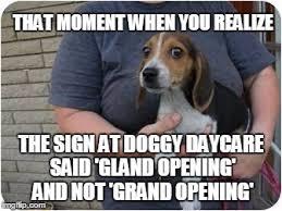Memes Scared - scared beagle memes imgflip