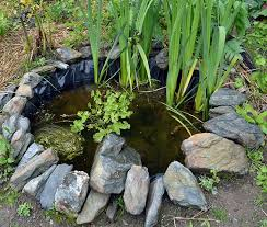 building a wildlife pond in the vegetable garden lovely greens