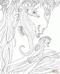 coloring pages engaging seahorse coloring babies
