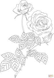 magic hybrid tea bush rose coloring page free printable coloring