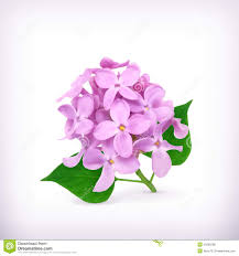 lilac flowers royalty free stock photos image 34200298