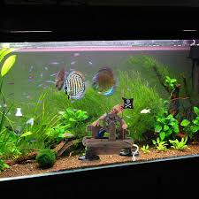 aliexpress buy 2017 fish tank ornament pirate