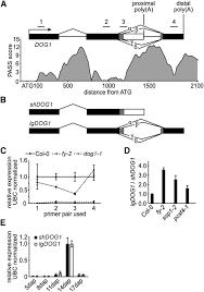 seed dormancy in arabidopsis is controlled by alternative