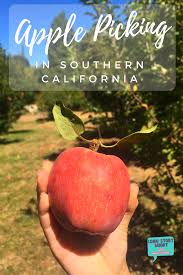 the best apple picking in southern california fall bucket list