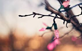 tree branch garland lights pink new year 7003245