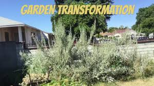 ca native plant nursery california native garden installation youtube