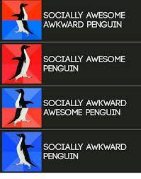 Awkward Memes - 25 best memes about socially awkward awesome penguin socially