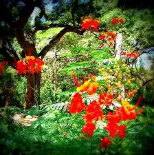 Zilker Botanical Garden Zilker Botanical Garden 2018 All You Need To