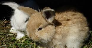 17 important bunny facts save animals
