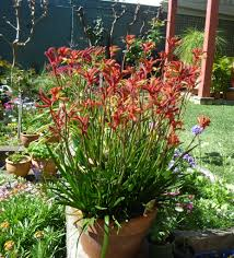 tips for adding colour to you garden gardening with angus