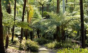 Mt Lofty Botanic Gardens Mount Lofty Botanic Garden One Of Australia S Finest Gardens In