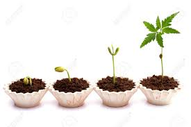plant growth baby plants in small pots stock photo picture and