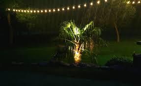 moonlighting tree lighting dallas landscape lighting