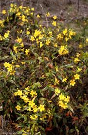 west texas native plants texas native plants database