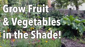 grow fruit and vegetables in the shade youtube