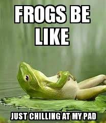 Funny Frog Meme - 12 best frogs images on pinterest funny photos frogs and