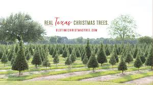 old time christmas tree farm home facebook