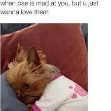 I Love You Bae Meme - 41 best when bae images on pinterest ha ha funny stuff and