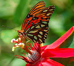 of the jungle symbiotic relationship of butterfly and