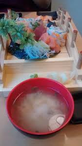 cuisine bento jumbo bento box picture of umai japanese cuisine shrewsbury