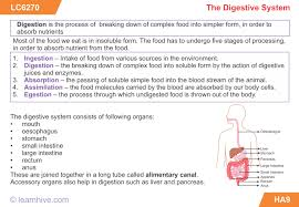 learnhive icse grade 7 biology ingestion digestion absorption