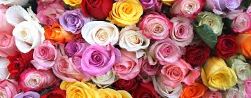 wholesale roses flowerlink