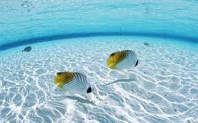 ocean fish desktop wallpaper 15236 1920x1200 umad com