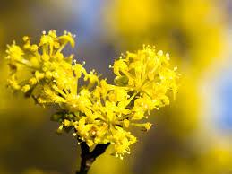 yellow flowers yellow flowers for your garden saga