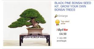 ebay bonsai yamadori from tony tickle