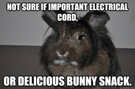 Angry Bunny Meme - 20 very funny rabbit meme photos and pictures