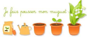 Faire pousser le muguet  Momesnet