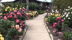 take a tour of the beautiful rose gardens on the bragg organic