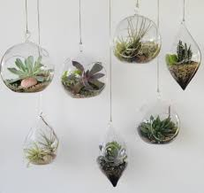 hanging terrariums hanging terrarium ornaments come in