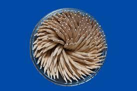 free photo tree stick toothpick medicine free image on